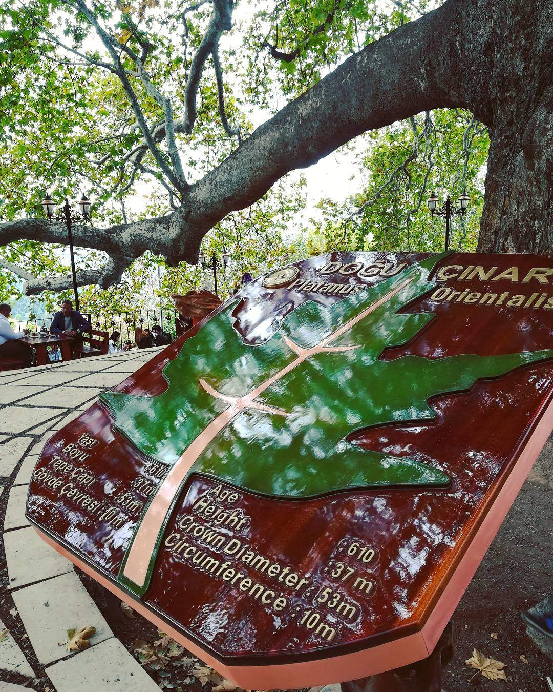 الشجرة التاريخية بورصة