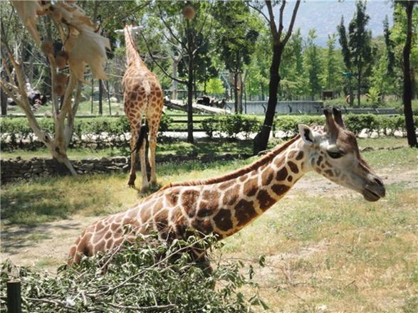 حديقة الحيوانات في بورصة - ملاهي في بورصة