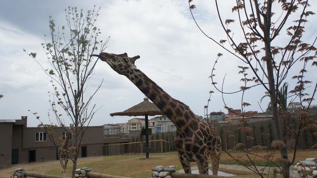 حديقة الحيوانات في اسطنبول فاروق يالجين تورنا