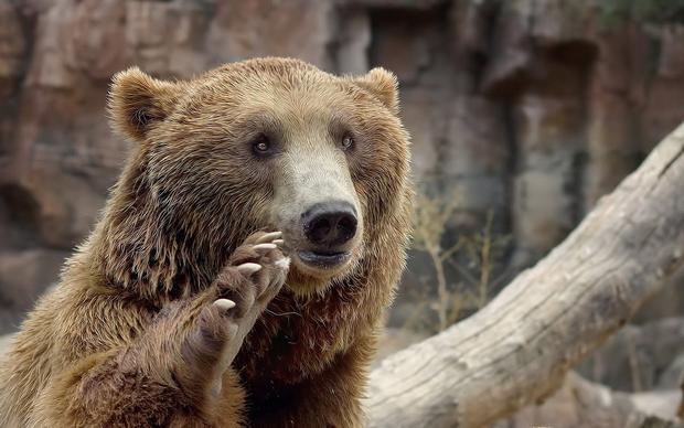 حديقة حيوانات اسطنبول من افضل حدائق اسطنبول و اماكن ترفيهية في اسطنبول