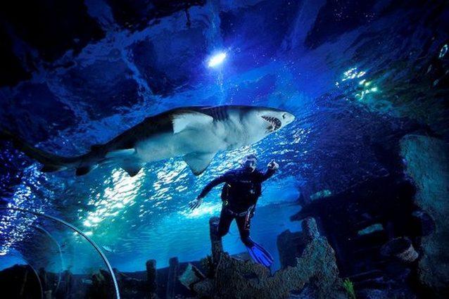 الغوص مع اسماك القرش في اكواريوم اسطنبول