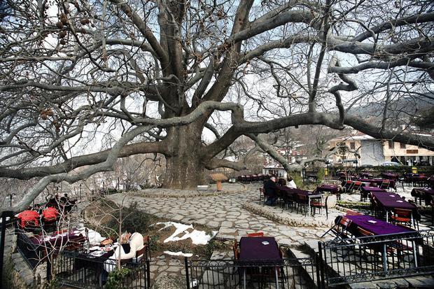 الشجرة التاريخية في بورصة - السياحة في بورصة