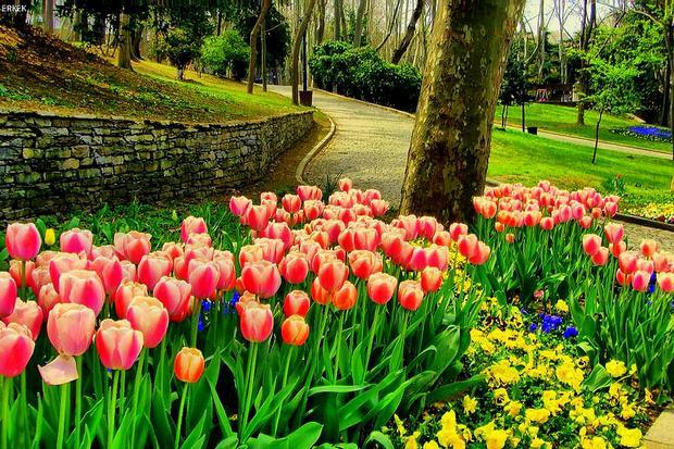 حديقة جولهانه اسطنبول تركيا