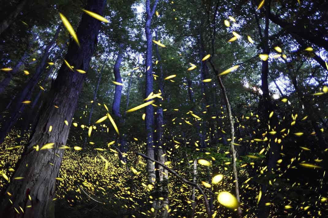 حديقة الفراشات المضيئة بسيلانجور - الاماكن السياحية في سيلانجور