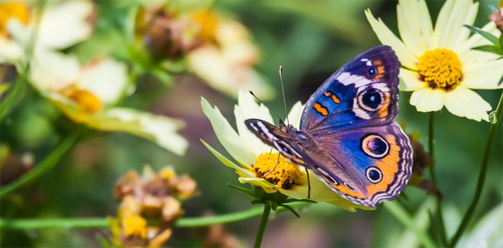 حديقة الفراشات في كوالالمبور - افضل الاماكن السياحية في كوالالمبور