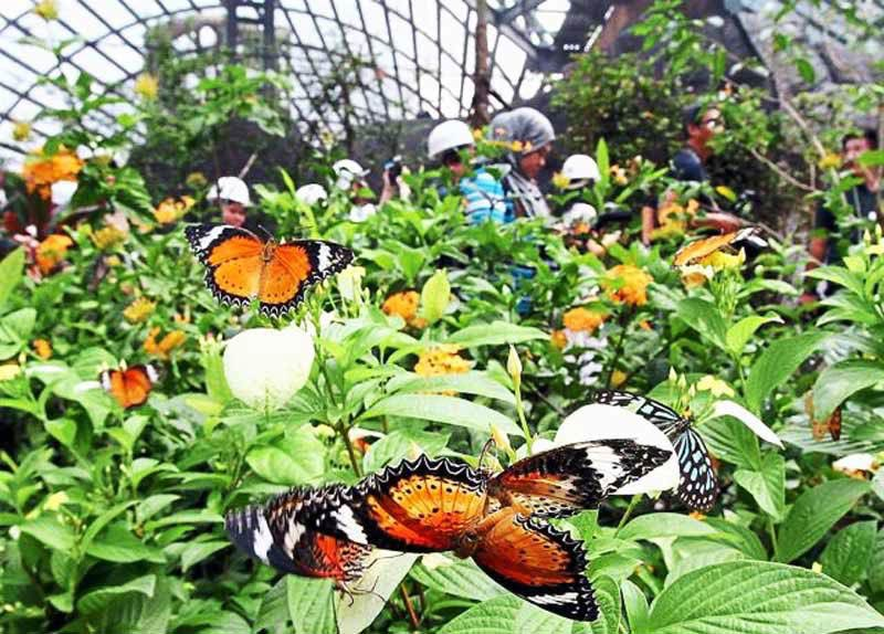 حديقة الفراشات في بينانج - اماكن الترفيه في بينانج