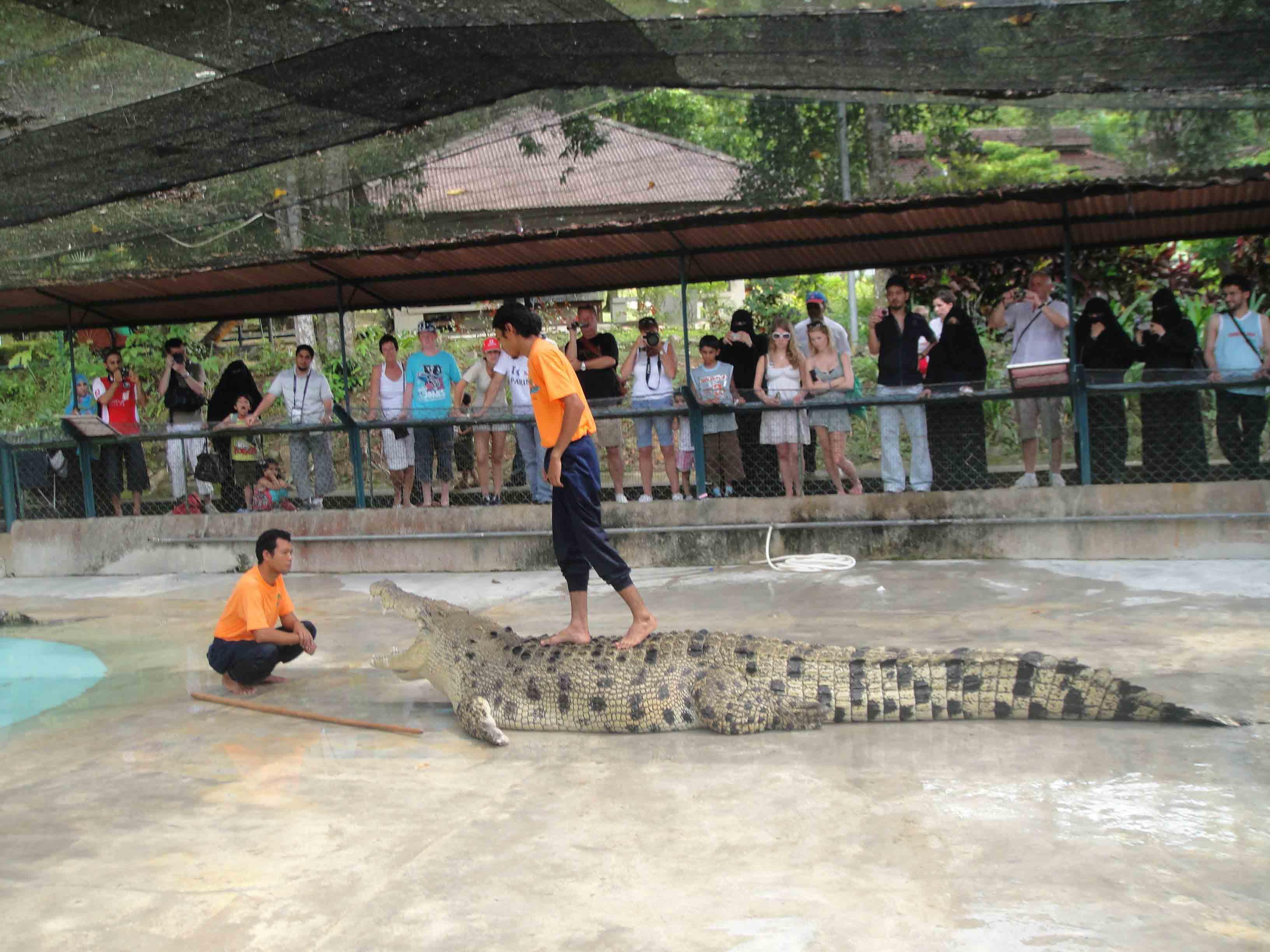حديقة التماسيح في لنكاوي - الاماكن السياحية في لنكاوي