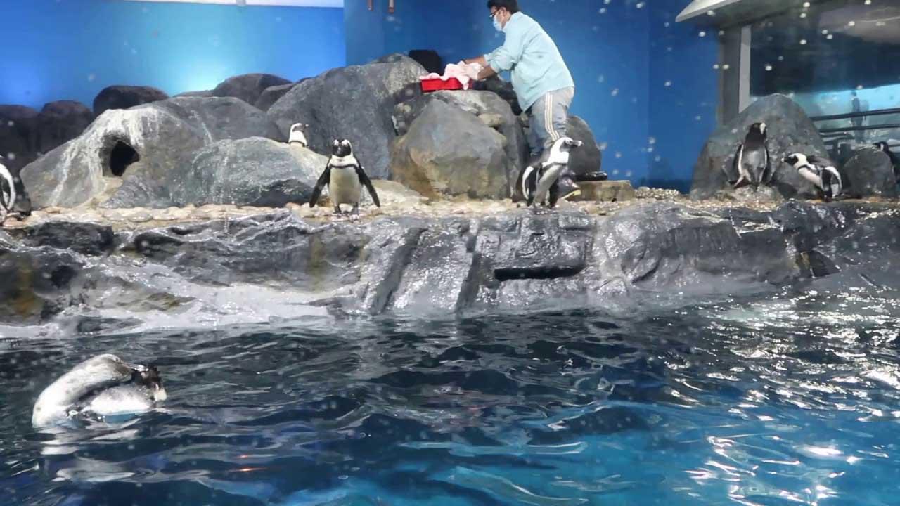 عالم تحت البحار لنكاوي - السياحة في لنكاوي