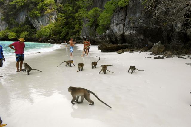 حديقة القرود في بينانج - اماكن الترفيه في بينانج