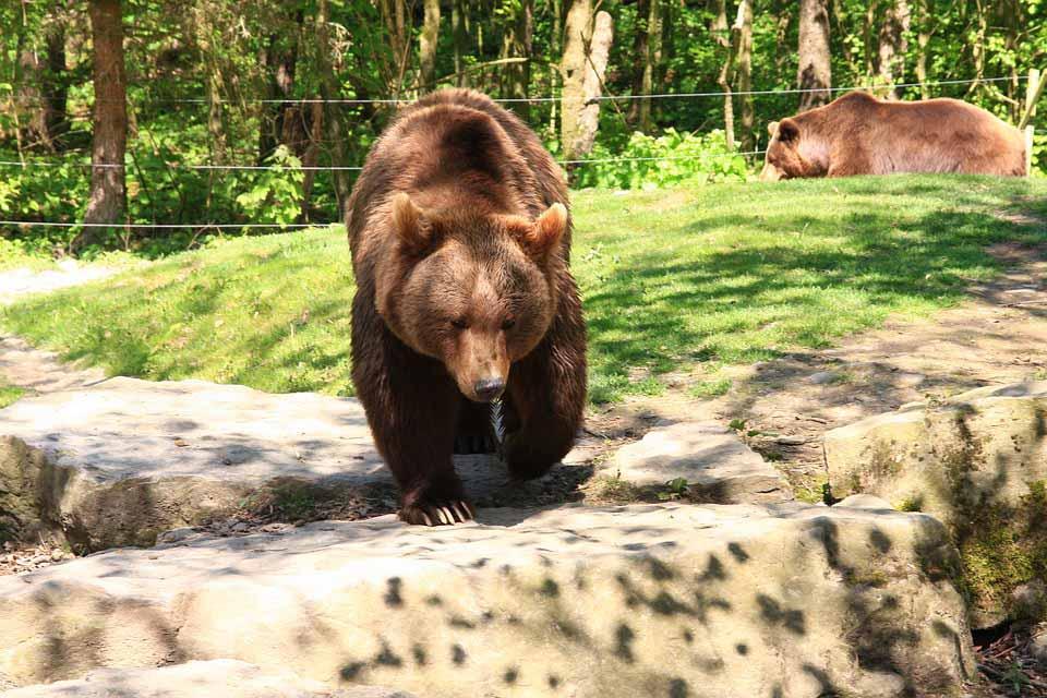حديقة الحياة البرية لنكاوي - افضل الاماكن في لنكاوي