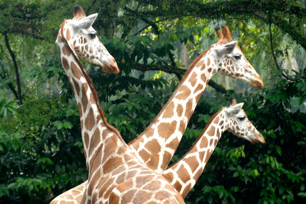 حديقة الحيوانات الوطنية نيجارا كوالالمبور - افضل الاماكن في كوالالمبور