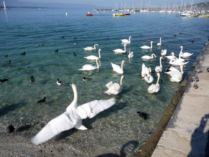 بحيرة ليمان جنيف