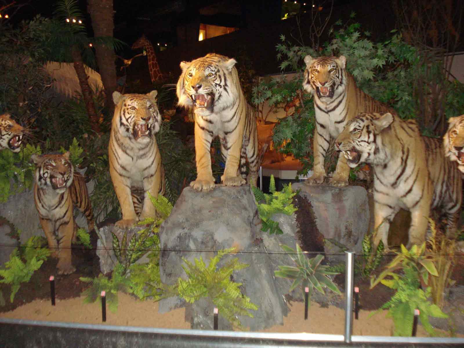 متحف التاريخ الطبيعي جنيف - السياحة في جنيف
