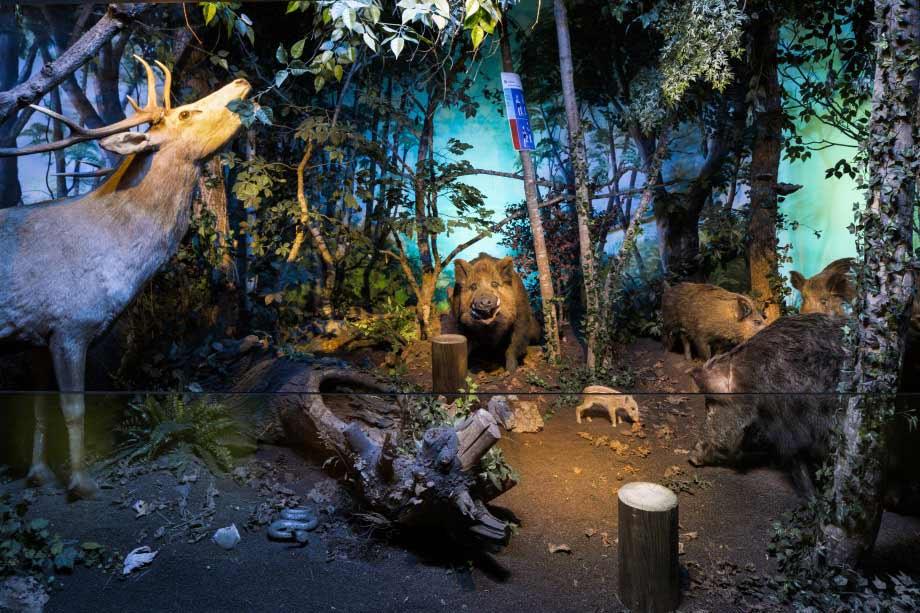 متحف التاريخ الطبيعي جنيف