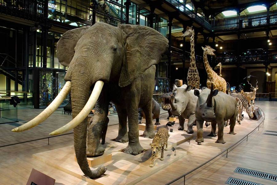 نتيجة بحث الصور عن متحف التاريخ الطبيعي في جنيف