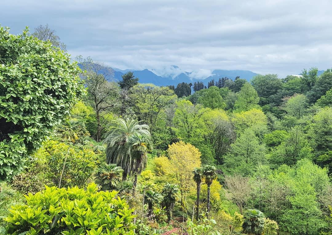 حديقة باتومي النباتية - افضل الاماكن في باتومي