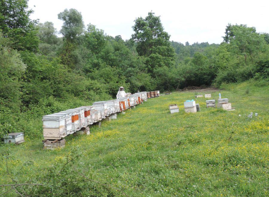 مناحل العسل الطبيعي في بورصة- السياحة في بورصة