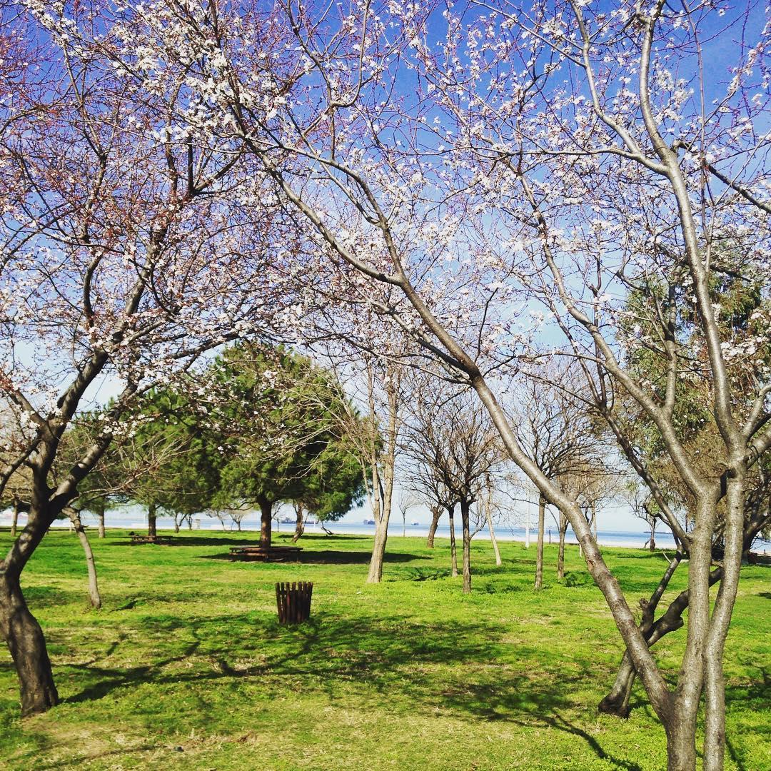 حديقة الشرق سامسون
