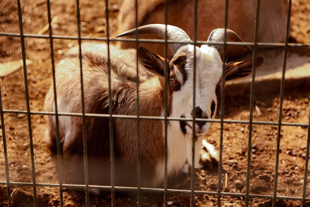 حديقة حيوانات سامسون