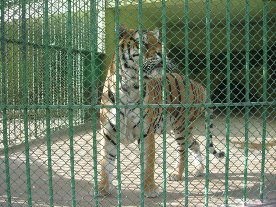 حديقة حيوانات سامسون - الاماكن السياحية في سامسون