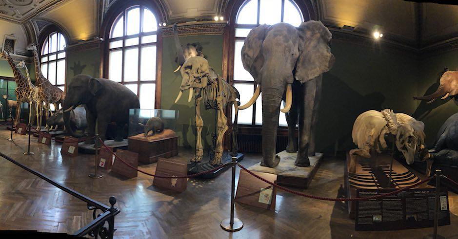 متحف التاريخ الطبيعي في فيينا - اجمل الاماكن السياحية في فيينا