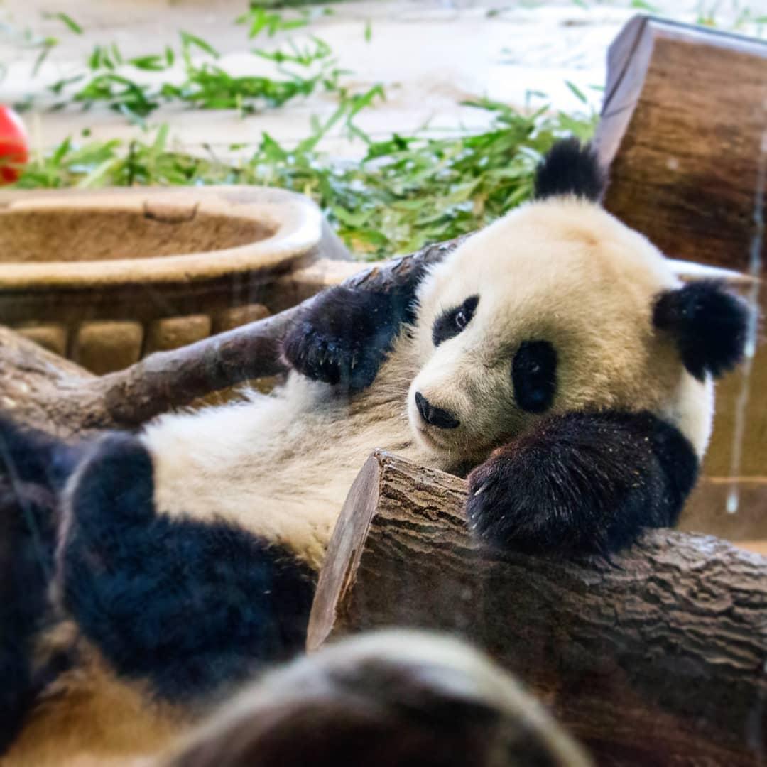 حديقة حيوانات فيينا - اجمل الاماكن في فيينا