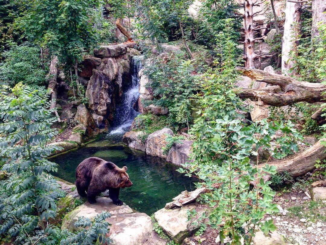 حديقة الحيوانات الألبية في انسبروك - السياحة في انسبروك