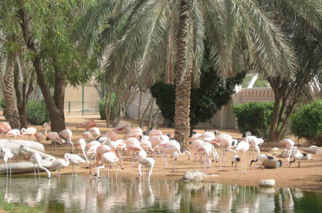 حديقة الحيوانات في العين