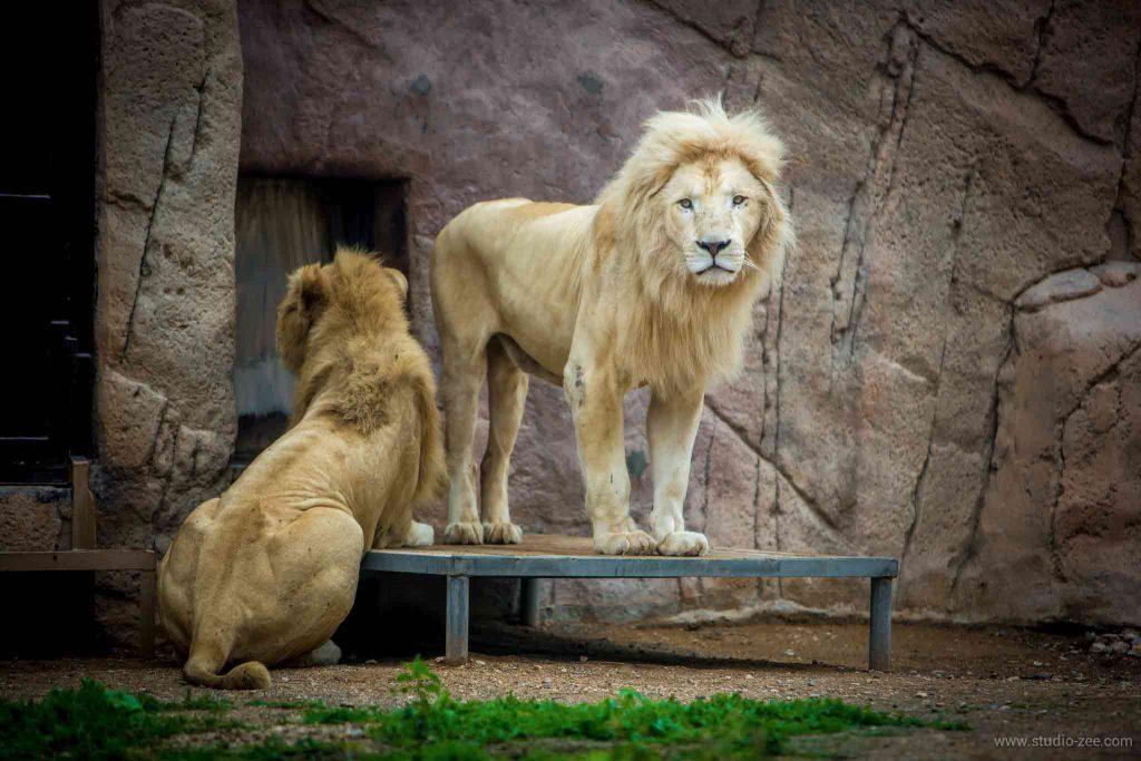 حديقة الحيوانات بالعين