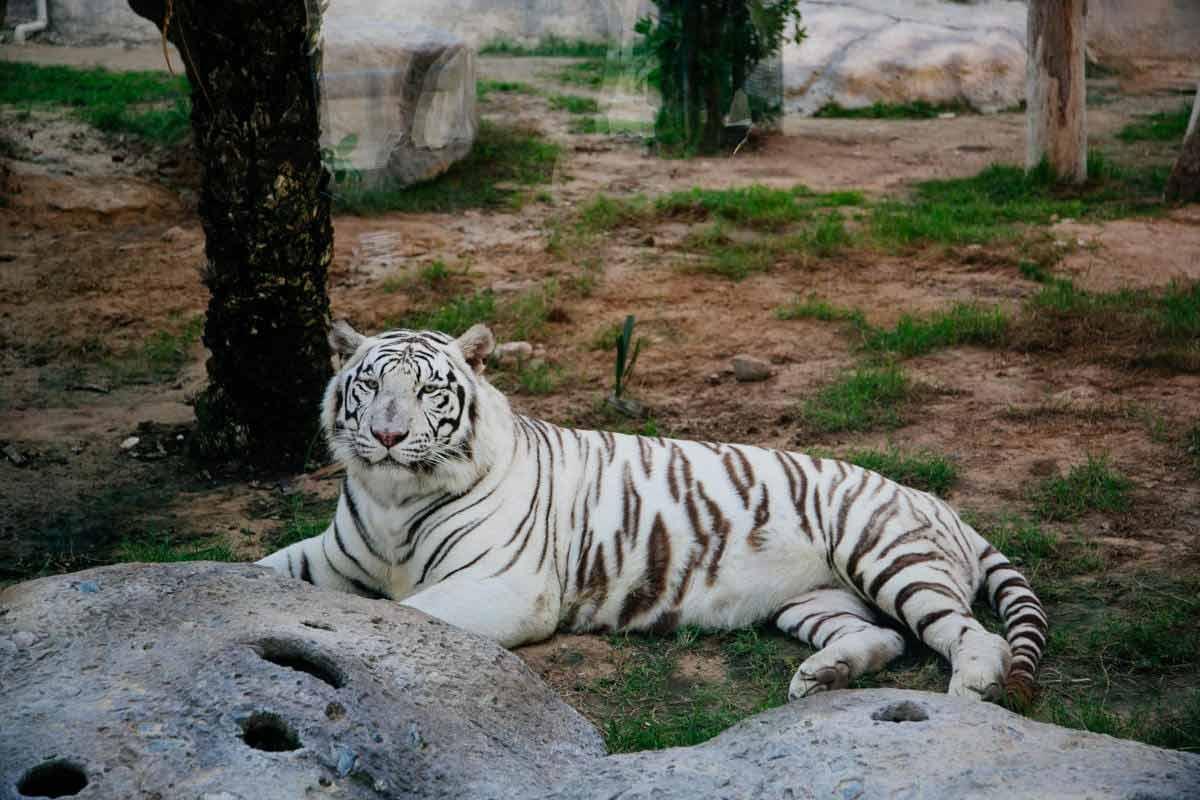 حديقة الامارات للحيوانات