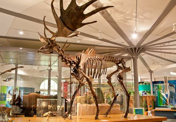 متحف مدينة ليدز