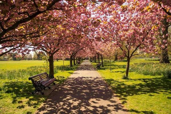 حديقة هايد بارك في لندن