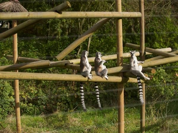 حديقة برمنجهام لحياة البرية