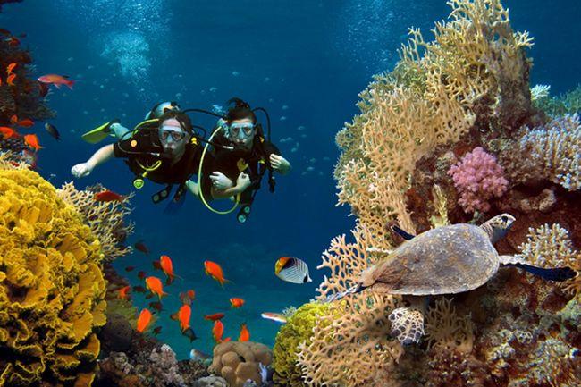 جزيرة المرجان راس الخيمة